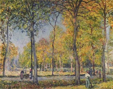 the forest at boulogne
