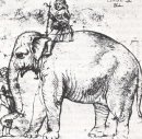 Hanno The Pope S Leo X Elephant 1516