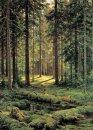 Coniferous Forest Sunny Day 1895