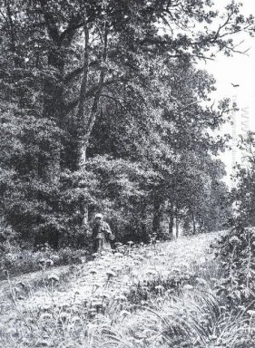 On The Forest Boundary Line 1878