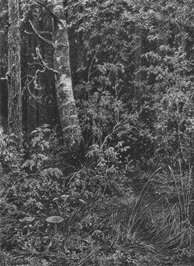 Thicket 1879