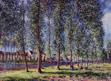 lane of poplars at moret 1888