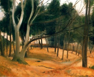 the path of forest 1928