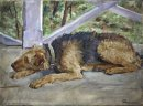 Airedale On The Balcony 1935