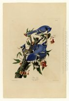 Plate 102 Blue Jay