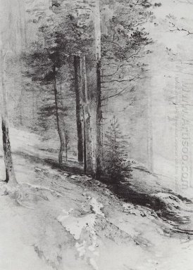 forest 1877