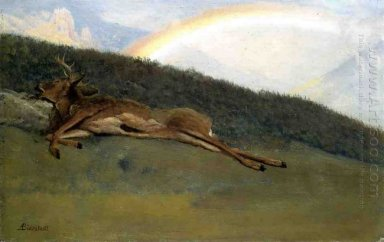 rainbow over a fallen stag