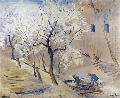 Apricot Trees In Blossom 1929