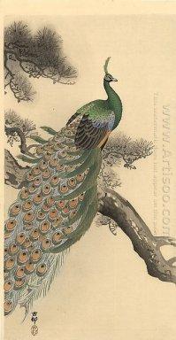 88 Gambar Lukisan Burung Merak Mudah Gratis Terbaik