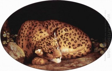 Sleeping Leopard 1777