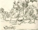 A Group Of Pine Trees 1889