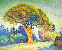 The Pine Tree At St Tropez 1909