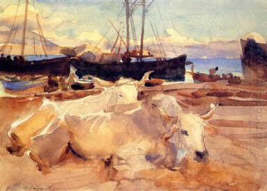 Oxen On The Beach At Baia