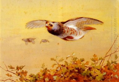 Anglais Partridge In Flight