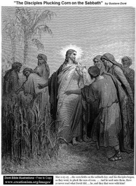 The Disciples Plucking Corn On The Sabbath
