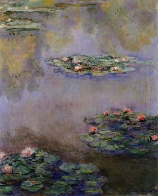 Water Lilies 36