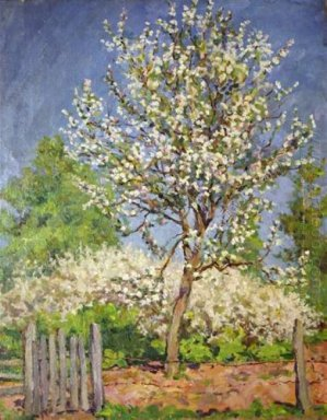 Apple Tree In Bloom 1953