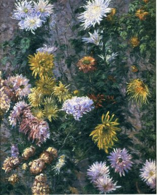 White And Yellow Chrysanthemums 1893