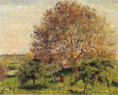 walnut tree in spring 1894