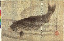 Grey carp in water