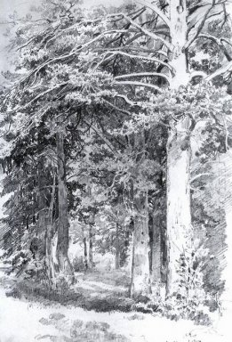 Pine Forest 1889