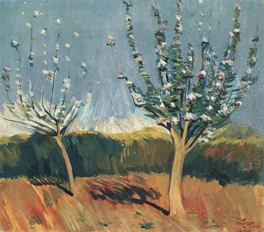 Apple Trees In Blossom 1912