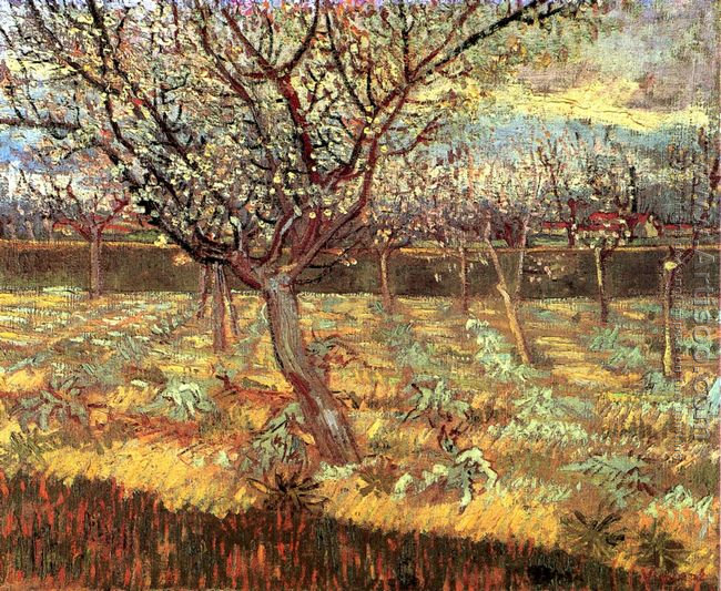 Apricot Trees In Blossom II