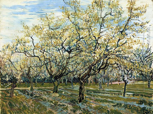 Orchard with Blossoming Plum Trees