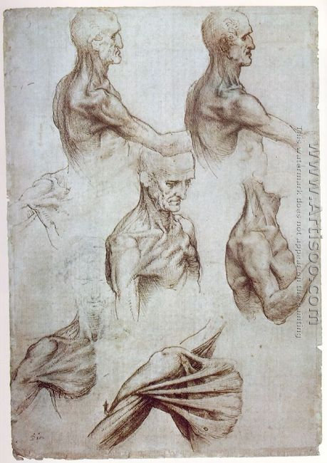 Muscles of the neck and shoulders 1515