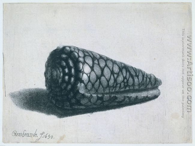 Cone Shell (Conus marmoreus)
