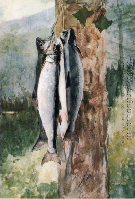 Adirondack Catch