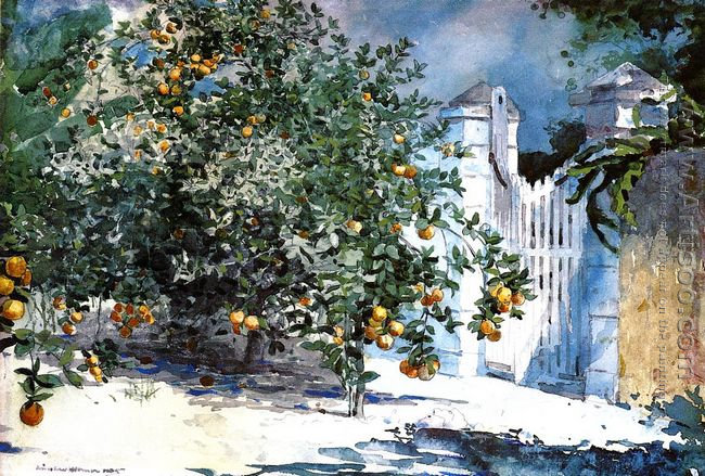 Orange Tree, Nassau (or Orange Trees and Gate)