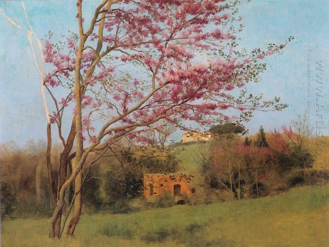 Landscape Of A Blossoming Red Almond