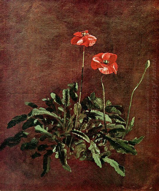 study for poppies