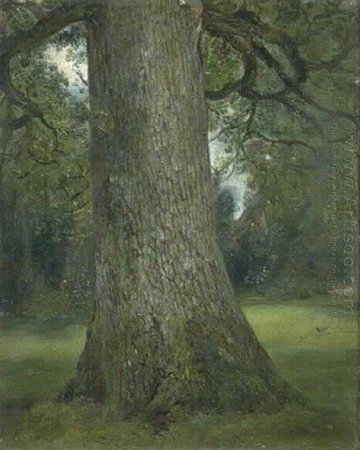 study of the trunk of an elm tree 1821