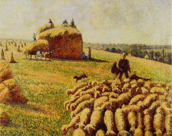flock of sheep in a field after the harvest 1889