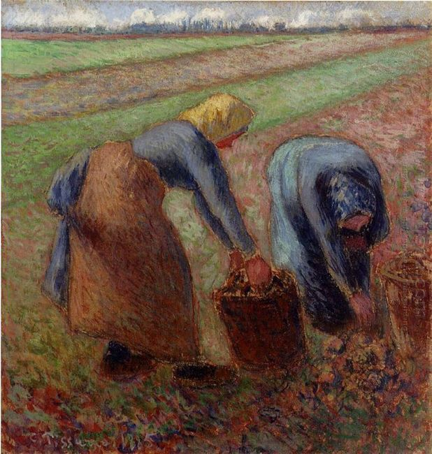 potato harvest 1885