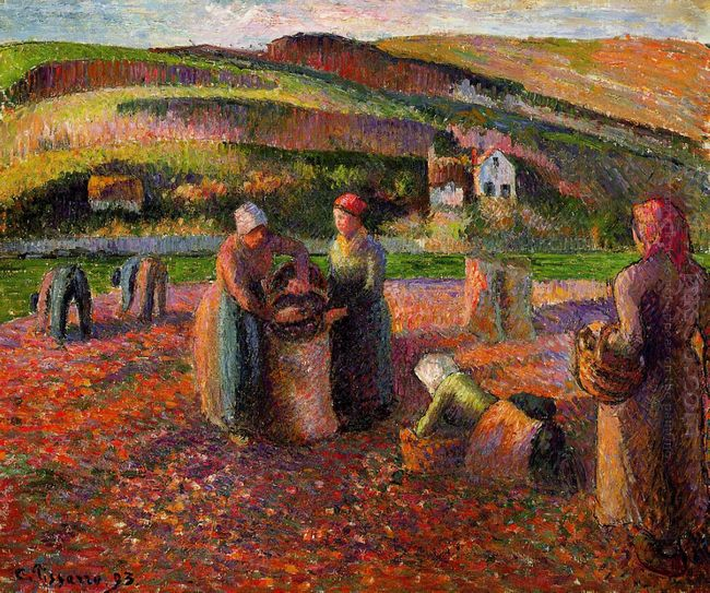 potato harvest 1893