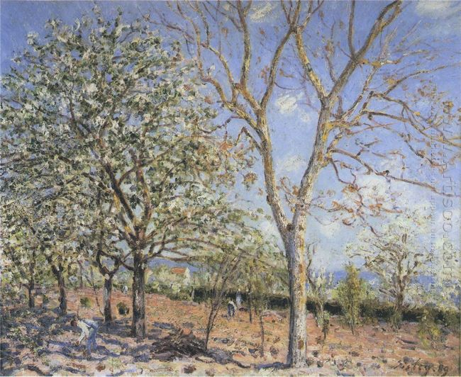 trees in bloom 1889