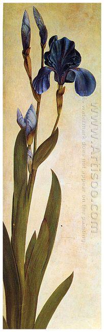 iris troiana