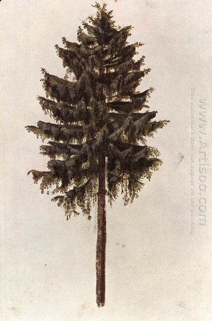 pine 1497