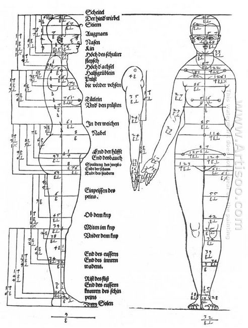 studies on the proportions of the female body 1528