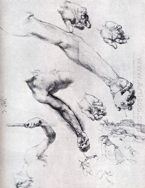 three studies from nature for adam s arms 1504