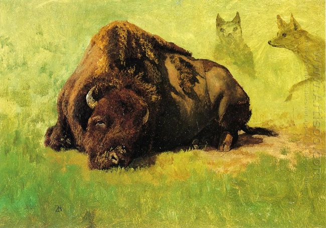 bison with coyotes in the background