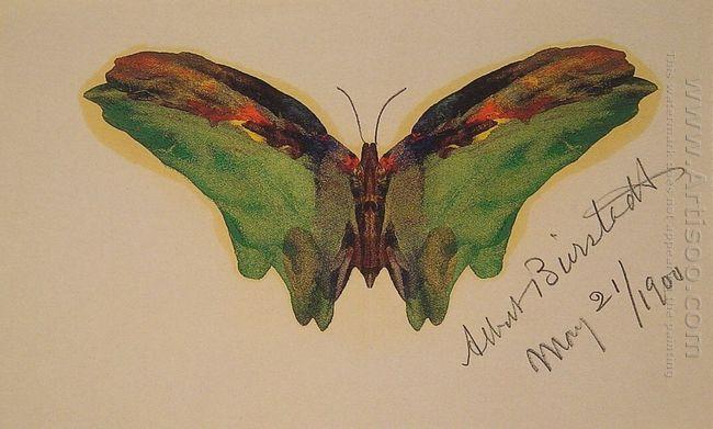 butterfly 1900