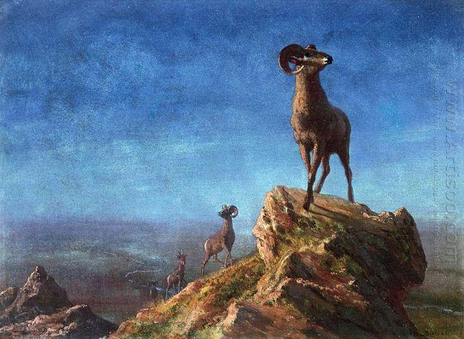 rocky mountain big horns
