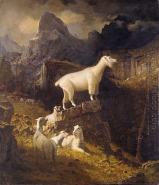rocky mountain goats 1885