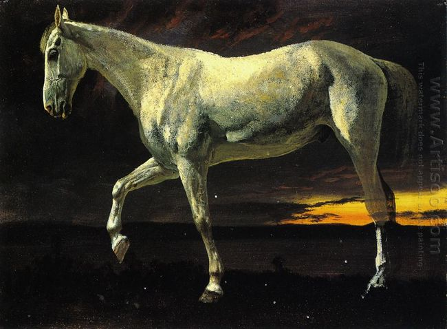white horse and sunset