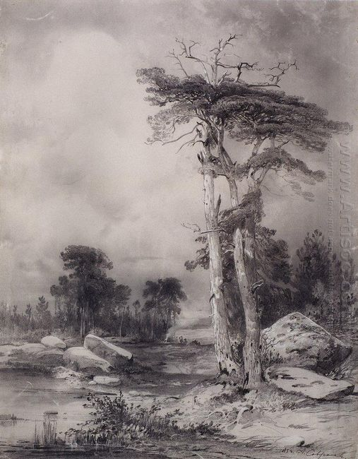 old pine 1854