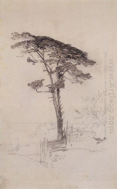 pine 1854